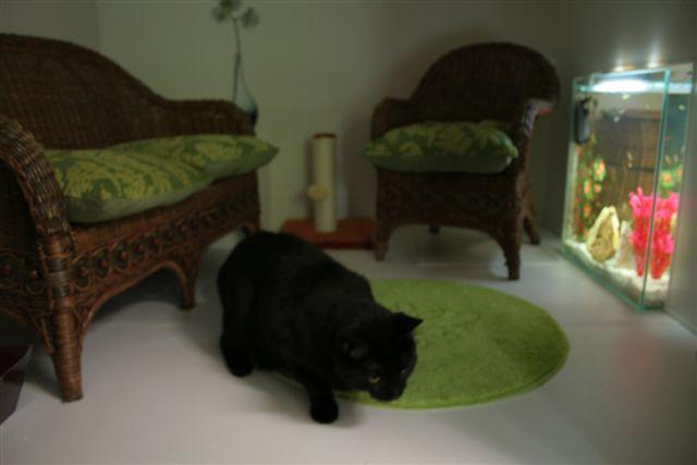img 7828. Black Bedroom Furniture Sets. Home Design Ideas