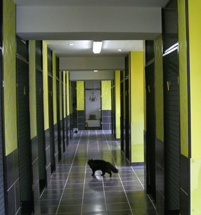 la minouterie pension pour chats en ile de france aux portes de paris pension pour chats. Black Bedroom Furniture Sets. Home Design Ideas