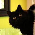 La Minouterie – Garderie pour chats longue durée ou courte durée