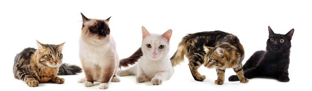 La minouterie. Pension pour chats en Ile de France, aux portes de Paris. Pension pour chats à Paris. Garde pour chats de Paris.