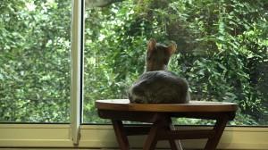 La Minouterie – merveilleuse vue sur le jardin des chats