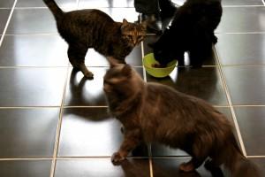 La Minouterie – Garderie pour chat